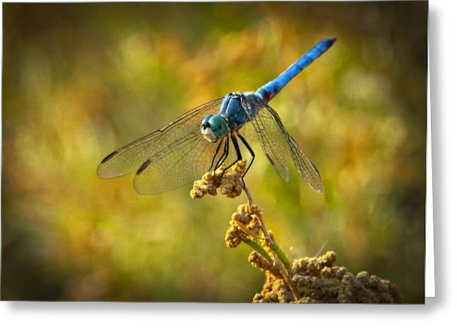 The Blue Dragonfly  Greeting Card