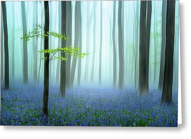 The Blue Forest ........ Greeting Card