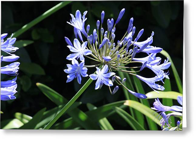 Greeting Card featuring the photograph The Blue by Ivete Basso Photography