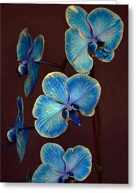 The Blue Orchid Greeting Card