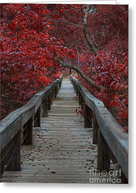 The Boardwalk Greeting Card by Douglas Barnard