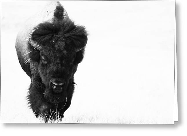 The Boss Greeting Card by Michele Richter