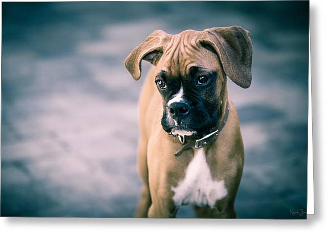 The Boxer Greeting Card by Karen Varnas