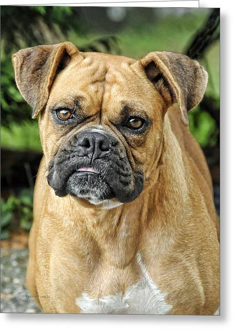 The Boxer Greeting Card by Kenny Francis