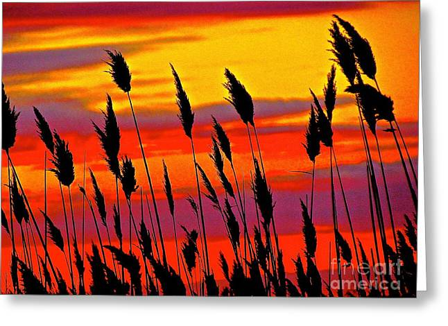 The Breeze Greeting Card by Q's House of Art ArtandFinePhotography