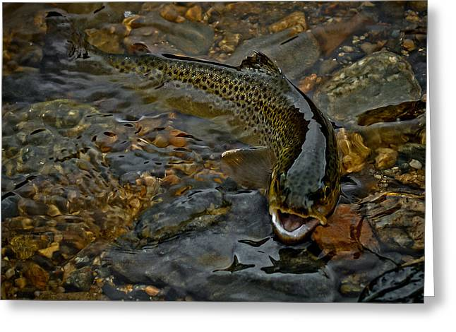 The Brown Trout Greeting Card