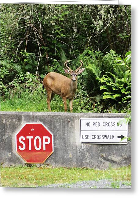 The Buck Stops Here Greeting Card by Kym Backland