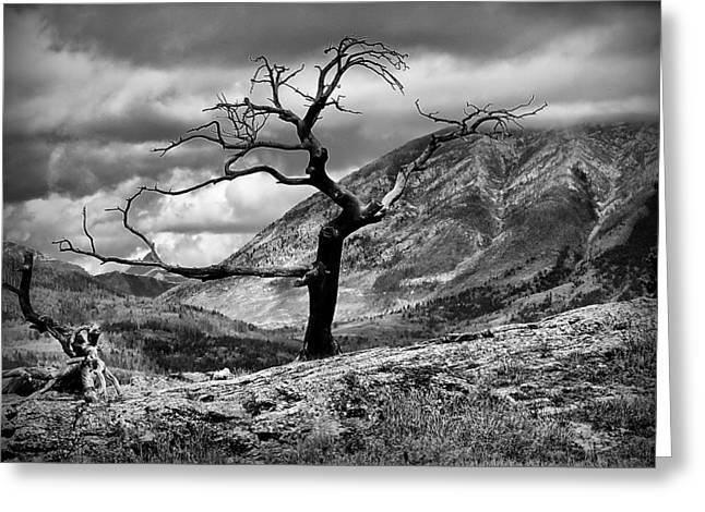 The Burmis Tree Greeting Card by Blair Wainman