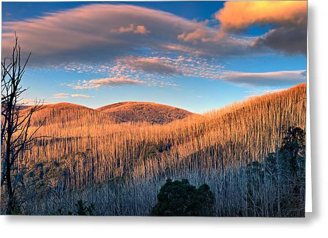 The Burnt Forest Greeting Card by Mark Lucey