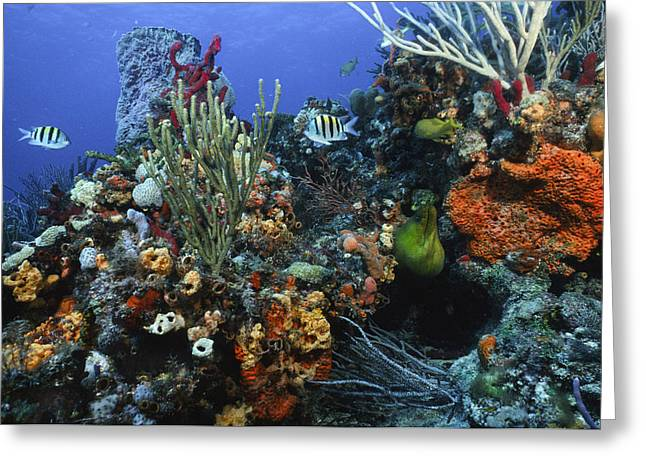 The Busy Reef Greeting Card