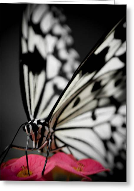 The Butterfly Emerges Greeting Card