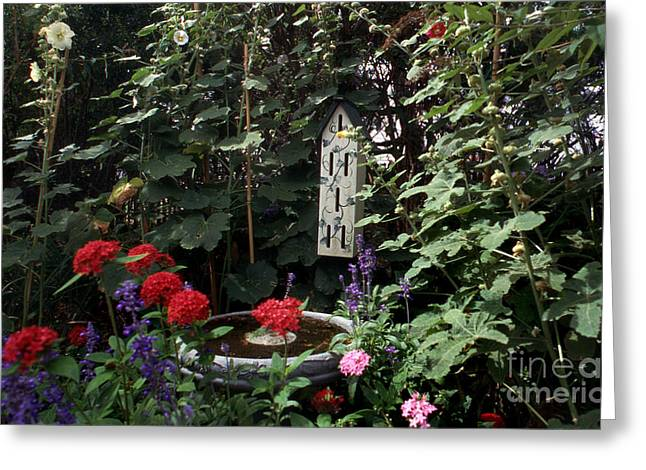 The Butterfly Garden Greeting Card by Skip Willits