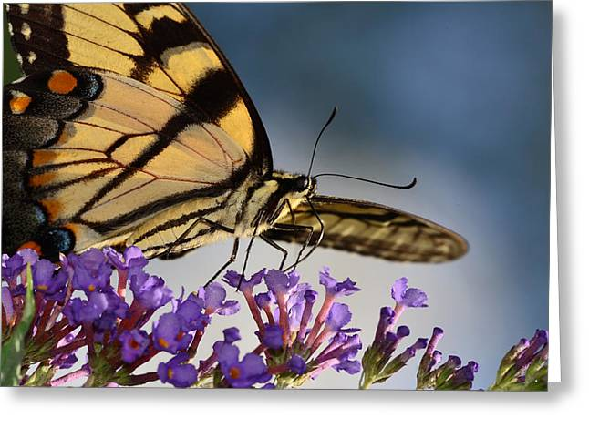 The Butterfly Greeting Card by Lori Tambakis