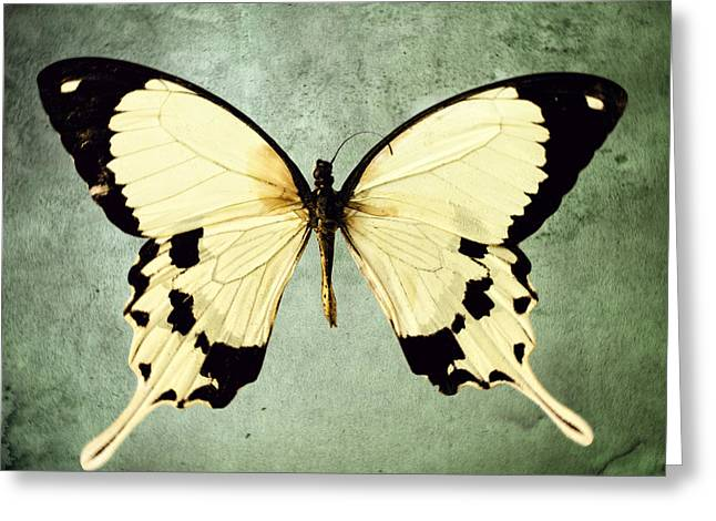 The Butterfly Project 1 Greeting Card by Diane Miller