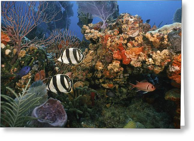 The Butterflyfish On Reef Greeting Card