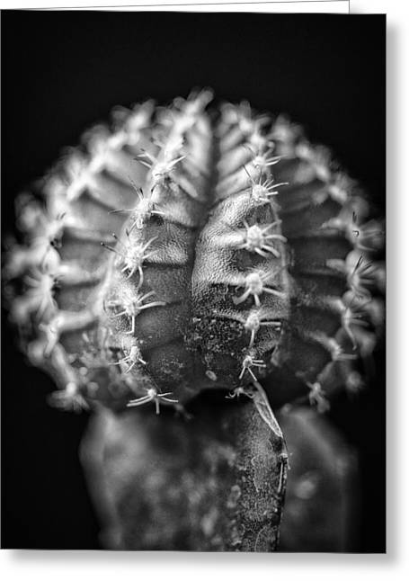 The Cactus Cacti In Grand Black And White Greeting Card by David Haskett