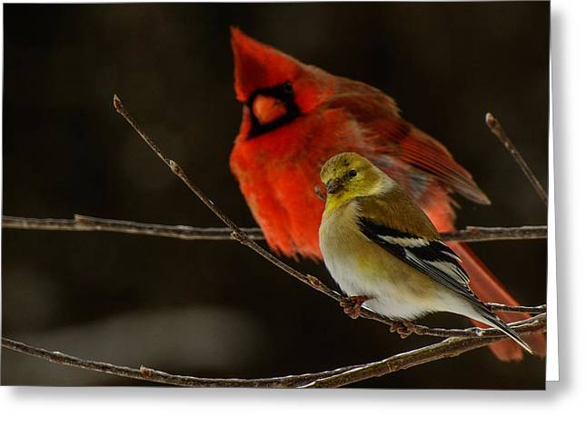 The Cardinal And The Goldfinch Greeting Card