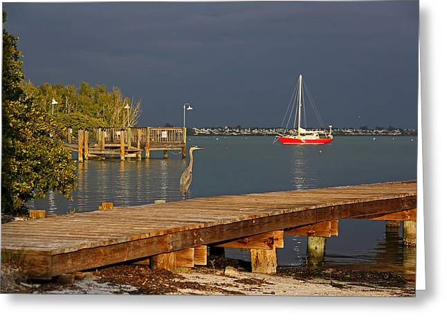 The Casual Observer Greeting Card by HH Photography of Florida