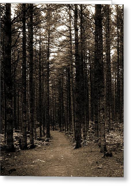 The Cathedral Woods, North Conway, White Mountains Greeting Card by Litz Collection
