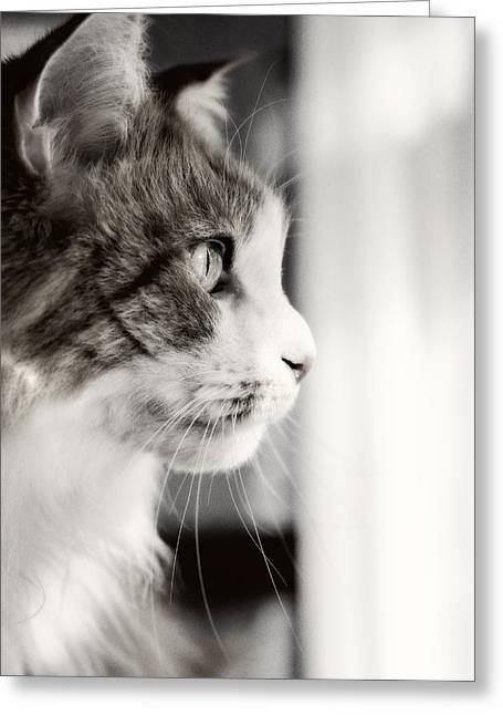 The Cat's Meow Greeting Card