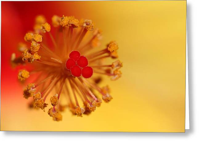 The Center Of The Hibiscus Flower Greeting Card by Debbie Oppermann