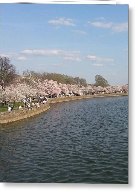 The Cherry Blossom Festival In D.  C Greeting Card