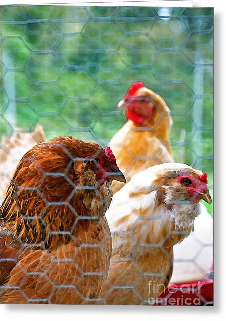 The Chickens Greeting Card by Gwyn Newcombe