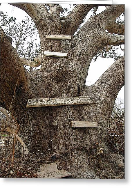 The Climbing Tree - Hurricane Katrina Survivor Greeting Card by Rebecca Korpita
