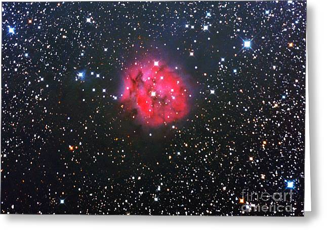 The Cocoon Nebula Greeting Card by John Chumack