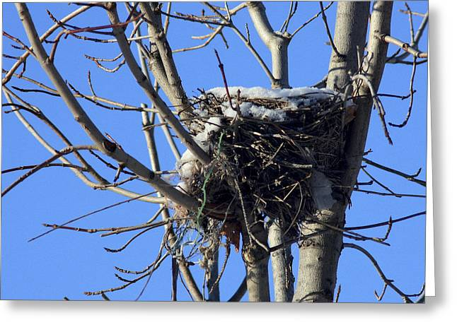 Greeting Card featuring the photograph The Cold Nest by Nick Mares