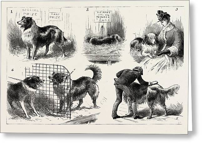 The Collie Dog Show At The Royal Aquarium, Westminster Greeting Card by English School