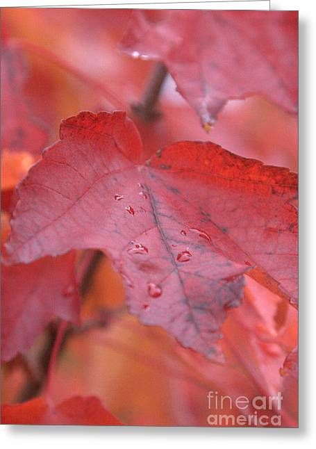The Color Of Autumn Greeting Card by Rich Collins