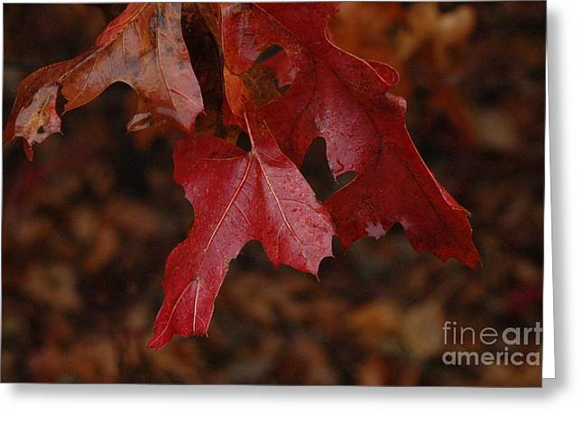 The Color Of Fall Greeting Card by Art Hill Studios