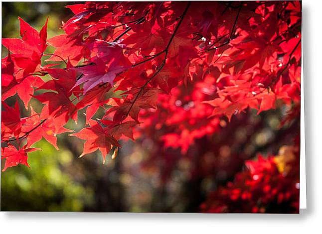 Greeting Card featuring the photograph The Color Of Fall by Patrice Zinck