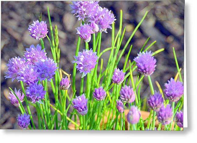 The Color Of Spring Greeting Card by Sue Rosen