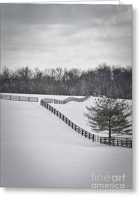 The Color Of Winter - Bw Greeting Card by Mary Carol Story