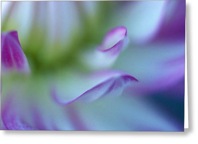 The Color Purple Greeting Card by Kathy Yates