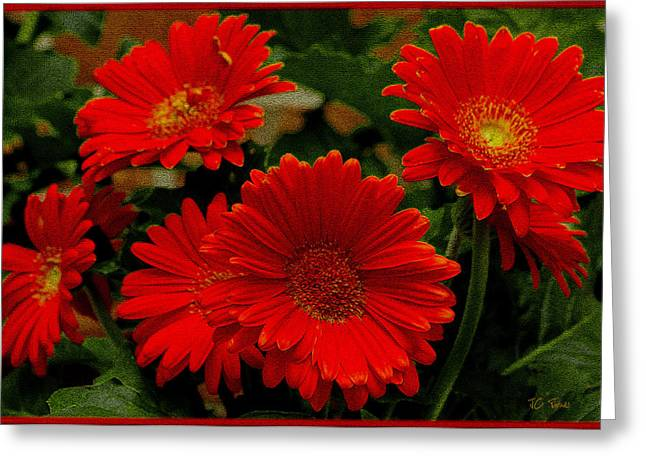 Gerbera Daisies Red Greeting Card
