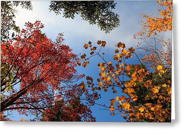 Looking Up Greeting Card by MaryGail Perkins