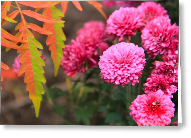 The Colors Of October Greeting Card