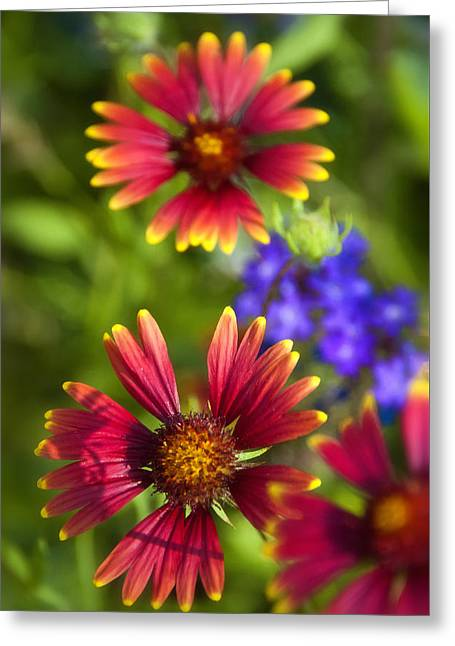 The Colors Of Summer  Greeting Card by Saija  Lehtonen