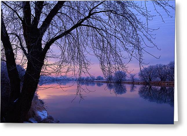 The Colors Of Winter Greeting Card by Lynn Hopwood
