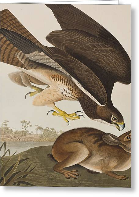 The Common Buzzard Greeting Card by John James Audubon