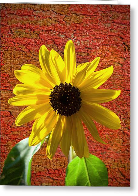 The Contrast Of Time Greeting Card by Sandi OReilly
