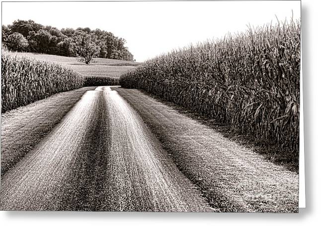 The Corn Road Greeting Card by Olivier Le Queinec