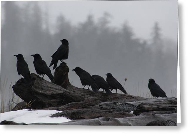The Corvidae Family  Greeting Card by Cathie Douglas