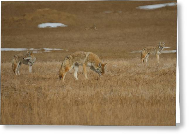 The Coyotes Painterly Greeting Card by Ernie Echols