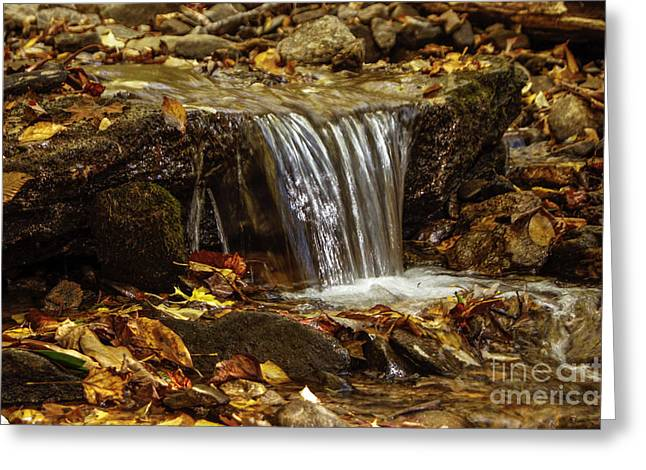 Greeting Card featuring the photograph The Creek by Debra Crank