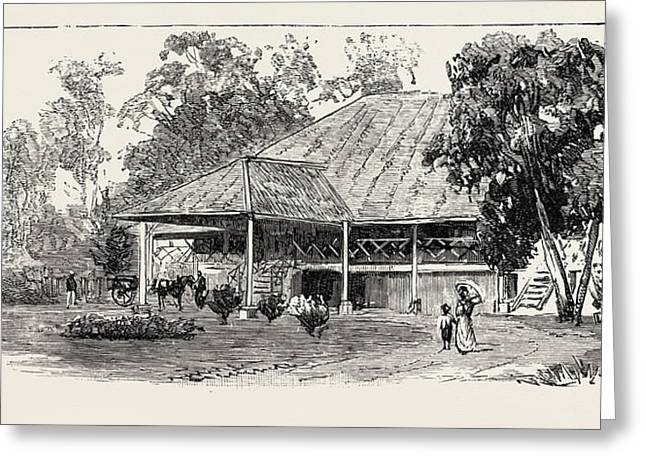 The Cultivation Of Tobacco In Sumatra, Indonesia A Planters Greeting Card by Indonesian School