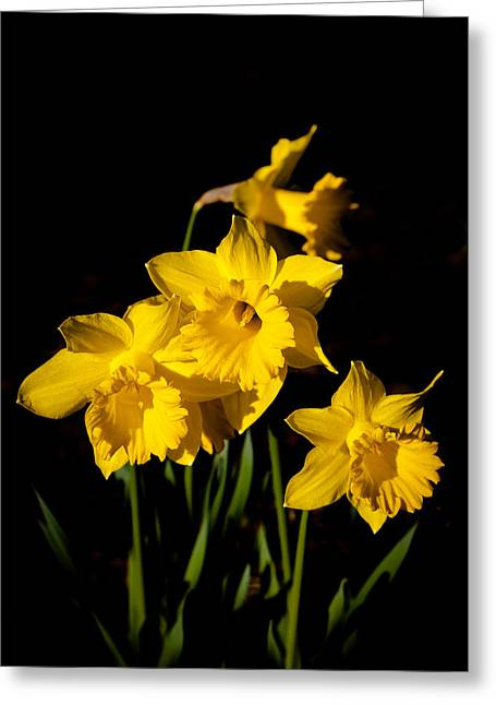 The Daffodils Greeting Card by David Patterson